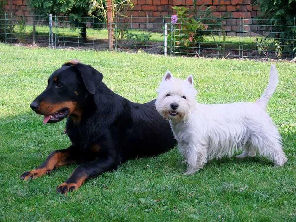 Beryl i Oshy