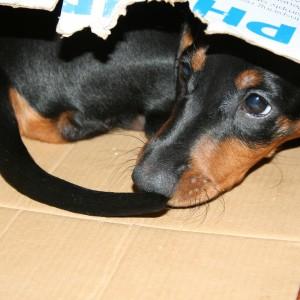 Terapia zaburzeń zachowań zwierząt Gliwice