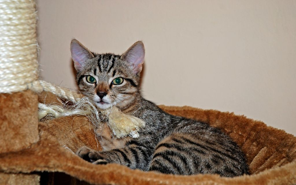 Czesiu - kociak na medal